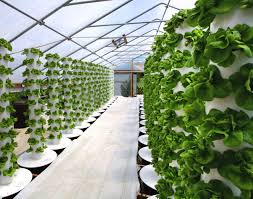 Aeroponic Vertical Garden Amish Farm Leads The Way To Local Food Security In Indiana
