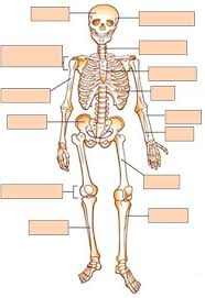 Human Quiz Website For Just Anatomy Learn Anatomy Learn Part 11