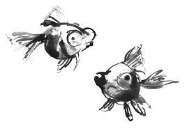 goldfish stasia u0027s studio