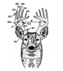 scdnr wildlife information