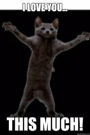 I Love You This Much Meme - kitty love memes quickmeme