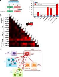 the art rsp5 ubiquitin ligase network comprises a plasma membrane