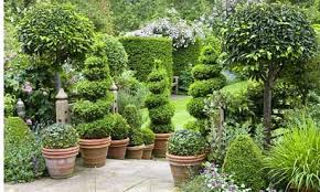 Laurel Topiary - home grown topiary jane owen life and style the guardian