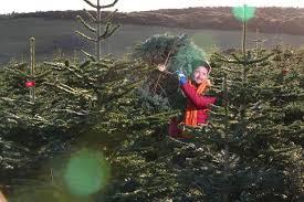 gateshead ikea 5 tree deal returns how to get one