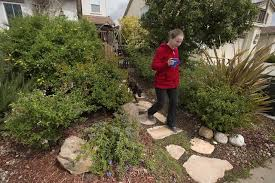 drought in california prompts some to rethink lawns as landscaping