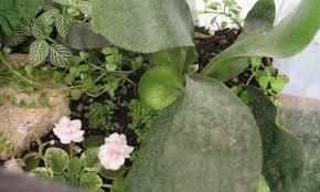 Miniature Indoor Plants by Building A Terrarium An Indoor Mobile Garden Fit For Kids