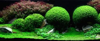 Aquascaping Plants Mind Blowing Aquariums Look Like Underwater Forests Deserts And