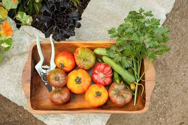 Gardening Trends 2017 Gardening Trends Ready To Sprout In 2017 Midwest Living