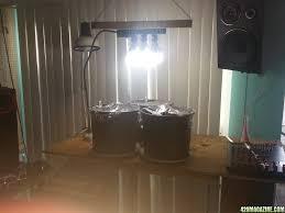 raiven u0027s 1st indoor grow thc bomb auto 2014