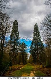 blackwater stock images royalty free images vectors