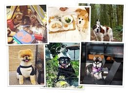hotels for dogs pet friendly boutique u0026 luxury hotels tablet