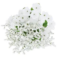 babys breath bulk floral garden 5 stem baby s breath bushes 12 in at