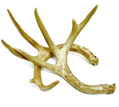 Home Decor Antlers Images About Country Life On Pinterest Cowgirl Boots Deer Antler