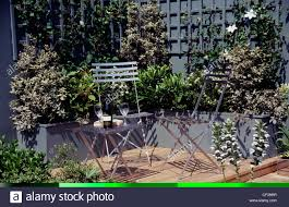 patio area decking grey wall and trellis climbing plants silver