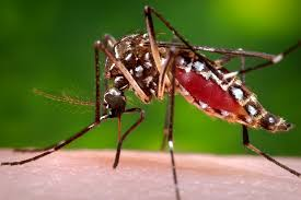 Where Do Mosquitoes Hide In Your Room by Phenomena