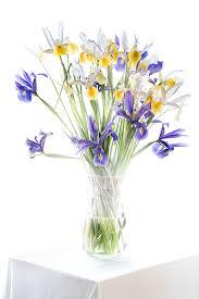 harold davis iris
