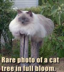 Fat Cat Meme - fat cat meme cute and funny fat cats