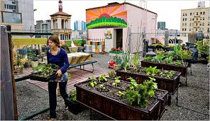 urban farming a bit closer to the sun the new york times