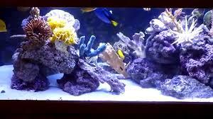 decorative saltwater aquarium shows how colorful artificial corals