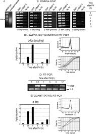 rnapol chip a novel application of chromatin immunoprecipitation