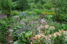 uk native plants noel u0027s garden blog telling the story of uk naturalistic planting