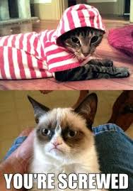 Grumpy Cat Snow Meme - grumpy in snow white got nothing on grumpy cat grumpy cat other