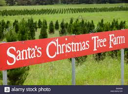 santas christmas tree farm christmas lights decoration