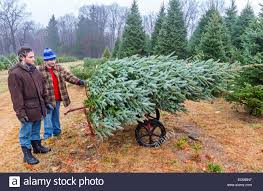 100 xmas tree farms albany ny where to cut down your own