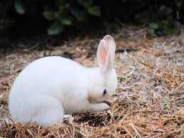 rabbit oregon