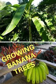 797 best growing houseplants indoor plants images on pinterest