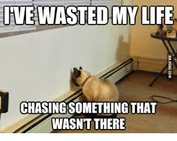 Meming Of Life - 25 best memes about cat chasing laser cat chasing laser memes
