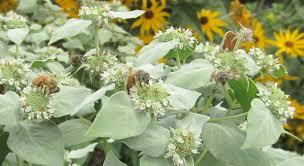 native plants online people meet native plants along manhattan u0027s high line princeton