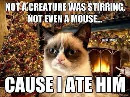 Merry Christmas Cat Meme - not a creature was stirring not even a mouse cause i ate him