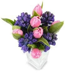 lidl ireland reveal budget friendly flower range just in time for