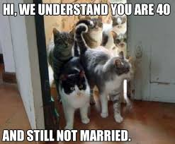 Married Meme - funny cat woman 40 not married meme meme cat and funny jokes