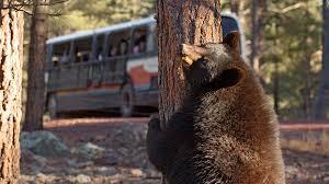 Arizona Wildlife Tours images Bearizona wildlife park jpg