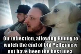 Bad Dog Meme - funny dog memes i top 50 of all time i world wide interweb