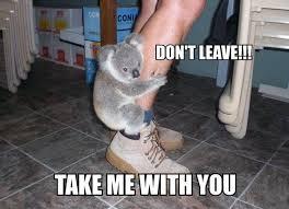 Snuggle Bear Meme - koala bear memes image memes at relatably com