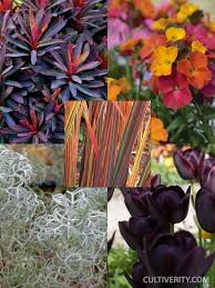 plant combination for saturated march color