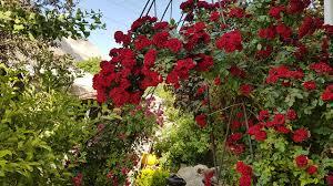 vana alpine rock garden fine gardening