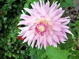 imagenes flores relajantes flores de mi jardin con musica relajante youtube
