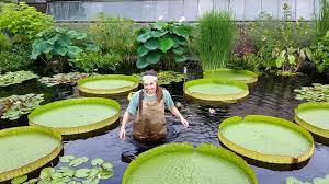 Botanical Garden Internship Internships In Agriculture Fields Csc Division Of Agriculture