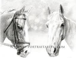 horse pencil portrait by melanie phillips
