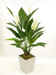 68cm potted artificial silk cream peace lily spathiphyllum plant