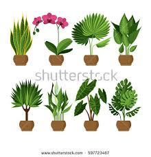 vector collection indoor house plants pots stock vector 597723467