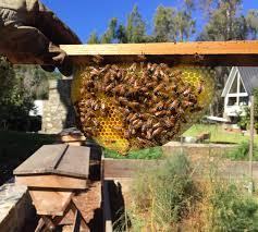 beekeeping like a how much room should i give my bees