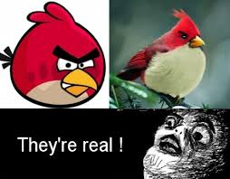 Crazy Bird Meme - omg they are real comics pinterest angry birds angry meme