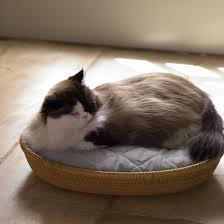 cat bed u0026 video martha stewart