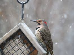 wings of winter your guide to feeding cold weather birds park