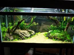 best images about aquarium fish tank aquascape in aquascape